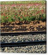 Rails And Roses Canvas Print