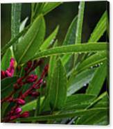 Rain Coated Blades Of Grass And  Deep Pink Petals Canvas Print