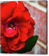 Rain Covered Red Rose Canvas Print