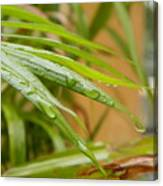 Rain Droppe1 Canvas Print