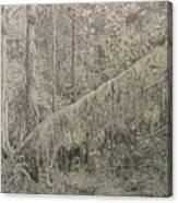 Rain Forest Canvas Print