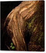 Rain Forest Light Canvas Print
