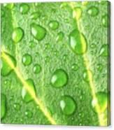 Rain On A Leaf Canvas Print