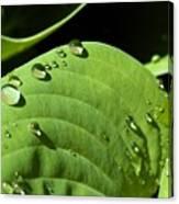 Rain On Leaf Canvas Print