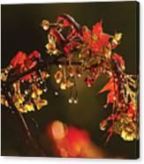 Rain Soaked Leaves-1 Canvas Print