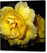 Rain Soaked Yellow Rose Canvas Print
