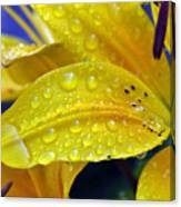 Rain Spotted Yellow Lily I 2009 Canvas Print