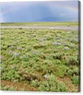 Rainbow And Lupine, Grand Teton Nm, Wyoming Canvas Print