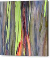 Rainbow Eucalyptus 13 Canvas Print