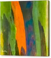 Rainbow Eucalyptus 5 Canvas Print
