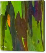 Rainbow Eucalyptus 6 Canvas Print