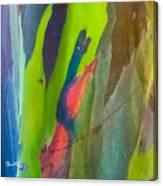 Rainbow Eucalyptus 7 Canvas Print