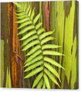 Rainbow Eucalyptus And Fern Canvas Print