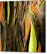 Rainbow Eucalyptus Bark Canvas Print