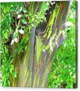 Rainbow Eucalyptus Canvas Print