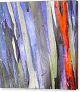 Rainbow Eucalyptus Tree Canvas Print