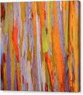 Rainbow Eucalytpus Canvas Print