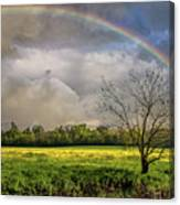 Rainbow Field Canvas Print