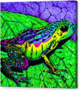 Rainbow Frog 2 Canvas Print
