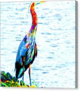 Rainbow Heron Canvas Print