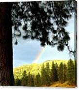Rainbow In Pine Country Canvas Print