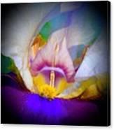 Rainbow In The Iris Canvas Print