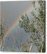 Rainbow In The Trees Canvas Print