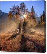 Rainbow In Yosemite Valley Ice Fog Canvas Print