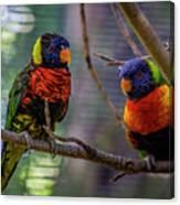 Rainbow Lorikeets Canvas Print