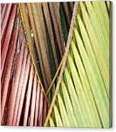 Rainbow Of Palms Gp Canvas Print