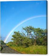 Rainbow Over Treetops Canvas Print