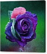 Rainbow Rose Among The Stars Canvas Print