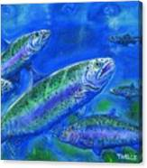 Rainbow Trout Swimming Canvas Print