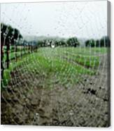 Raincatcher Web Canvas Print