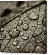 Raindrops #1 Canvas Print