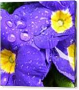 Raindrops On Blue Flowers Canvas Print