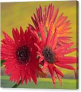 Raindrops On Gerbera Canvas Print