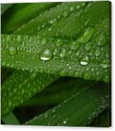 Raindrops On Green Leaves Canvas Print