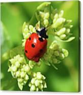 Raindrops On Ladybug Canvas Print