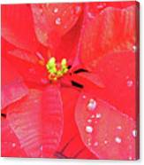 Raindrops On Red Canvas Print