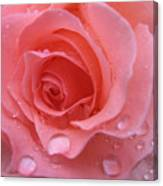 Raindrops On Roses And..... Canvas Print