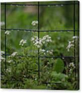 Raindrops On The Garden Fence Canvas Print
