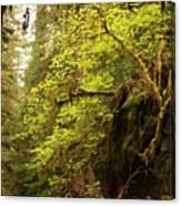 Rainforest Awakening Canvas Print