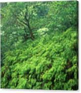 Rainforest Maui Canvas Print
