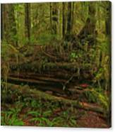 Rainforest Nurse Canvas Print