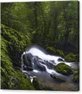 Rainforest Riverflow Scene Canvas Print