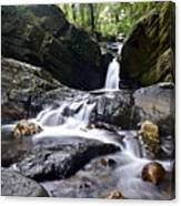 Rainforest Stream Canvas Print