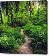 Rainforest Trail Canvas Print