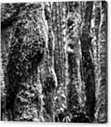 Rainforest Ubiquitous Growth  Canvas Print