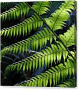 Rainforest Wonder Canvas Print